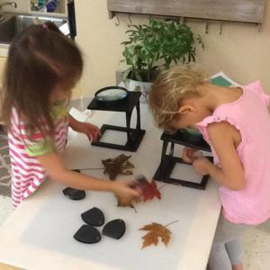 Children examining leaves under a microscope.